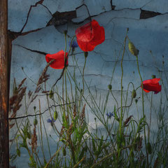 "<span style=""font-family: Ubuntu Condensed; letter-spacing:0.3em;"">POPPIES II</span><br>"