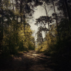 """<span style=""""letter-spacing:0.3em"""">READ ME A FOREST STORY</span><br>"""