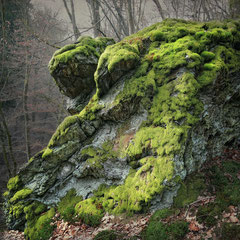"<span style=""font-family: Ubuntu Condensed; letter-spacing:0.3em;"">MOSS AND STONE</span><br>"