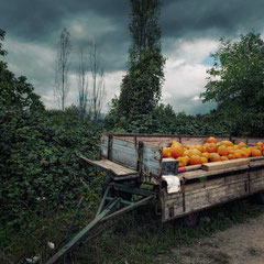 "<span style=""font-family: Ubuntu Condensed; letter-spacing:0.3em;"">LANDSCAPE WITH PUMPKINS</span><br>"