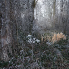 "<span style=""font-family: Ubuntu Condensed; letter-spacing:0.3em;"">WINTER SPIRITS</span>"