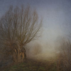"<span style=""font-family: Ubuntu Condensed; letter-spacing:0.3em;"">WILLOWS ON A FOGGY MORNING</span> </p>"