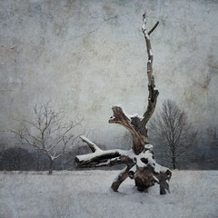 "<span style=""font-family: Ubuntu Condensed; letter-spacing:0.3em;"">A WINTER SYMPHONY 