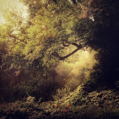 """<span style=""""font-family: Ubuntu Condensed; letter-spacing:0.3em;"""">NOTES FROM THE FOREST DIARY -<br />DAY THIRTEEN</span> </p>"""