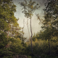 """<span style=""""font-family: Ubuntu Condensed; letter-spacing:0.3em;"""">NOTES FROM THE FOREST DIARY -<br />DAY FIFTEEN</span> </p>"""