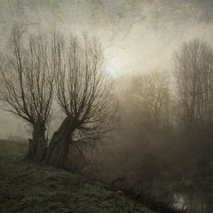 "<span style=""font-family: Ubuntu Condensed; letter-spacing:0.3em;"">WILLOWS ON A FOGGY MORNING II</span> </p>"