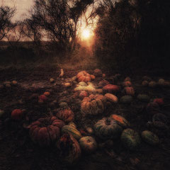 "<span style=""font-family: Ubuntu Condensed; letter-spacing:0.3em;"">PUMPKIN SUNDOWN</span><br"