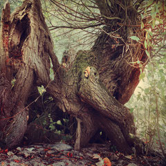 """<span style=""""font-family: Ubuntu Condensed; letter-spacing:0.3em;"""">THE LIVING WOODS</span> </p>"""