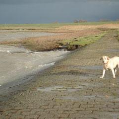 Winter Nordsee , steife Brise , eiskalter Wind