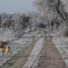 Winterland , weites Land, mein Hund und ich allein