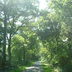 Wege und Weite , wandern in der naturgeschützen Wallheckenlandschaft