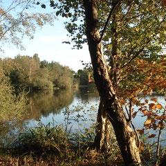 ein ruhiger See mit Rundweg.