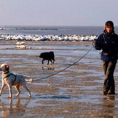 Gemeinsame Spur ... Hundetrainerin Vera Michaelis  Stammgast