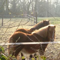 Ostfriesland ist ein Ponyhof ...