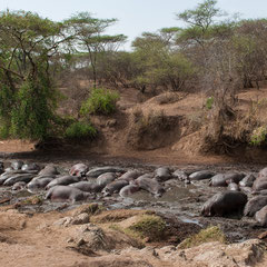 Serengeti - Hippo Pool