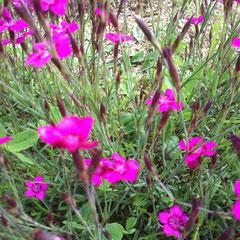 Fleurs d'été !