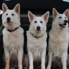 Kira, Leona, Shameera