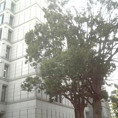 大阪市役所北西より