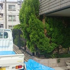 木の伐採作業before