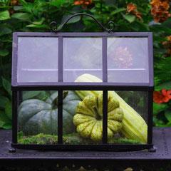 27.09.2010 Kürbisse im Glashaus.Eins von mehreren Glashäusern in unserem Garten!Ständig wechselnder Inhalt!