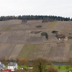 Ansicht auf das Biokohlesubstrat im Weinberg - deutlich sichtbar