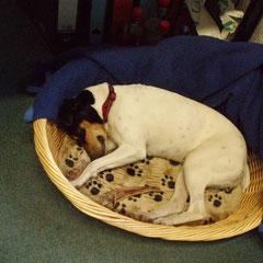 Schlafend im Büro