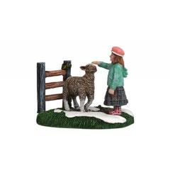 610054-Kara with sheep