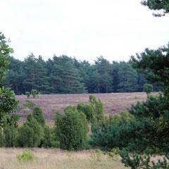 Heide bei Lutterloh