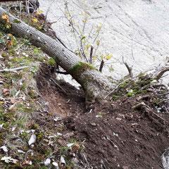 Uhubrutnische am Mittleren Lech - Foto: Alex Klose