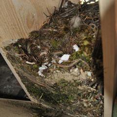 Dohlenkasten gefüllt mit Nistmaterial © Ingrid Schubert