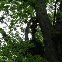 Beringung der Nestlinge in Polen - Foto: Krzysztof Dudzik