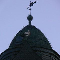 16.02.14: Weißstorch übernachtet auf der Fronhäuser Kirche - Foto: Stefan Wagner