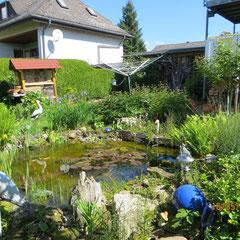 11.01.15 Eisvogel am Gartenteich in Bellnhausen - Foto: Friedrich-Karl Menz