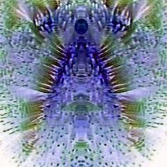 Willst du deinen Engel erfahren,  achte auf die Momente tiefer, innerer Berührung