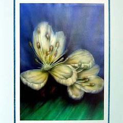 Nr. 2/01 Blüte  Airbrush auf Spezialpapier Fin Art  80x60 cm inkl. Karton - Passepartout , Glas, Metallrahmen Gold eluxiert inkl. Rückwand   Euro 420,-