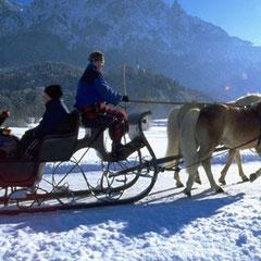 Pferdeschlittenfahrt im Ferienland Kufstein