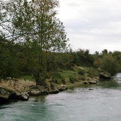 Fortpflanzung bei Ameiurus nebulosus: In der Natur bevorzugen Katzenwelse oft solche Gewässer.