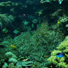 Korallenbecken im Haus des Meeres