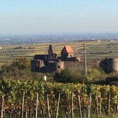Neuleiningen in der Pfalz, umgeben von Weinbergen