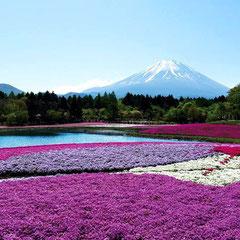 Les parcs fleuris du Mont Fuji