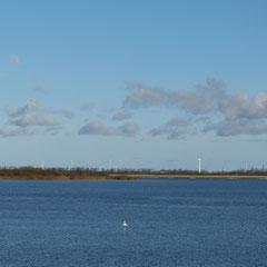 10. November 2013 ☆13:30 Uhr ╰დ╮ Meldorfer Hafen