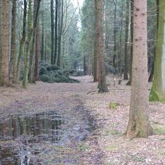 Heide/ Holstein ☆ Kreistannen ☆Spaziergang im März!