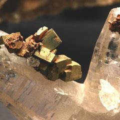 Ein Exponat in der SZM-Vitrine: Pyrit auf Quarz, Fundort: Bedrettotal, TI