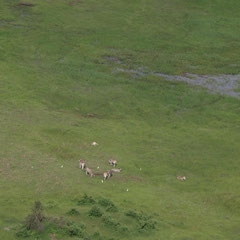 und Antilopen