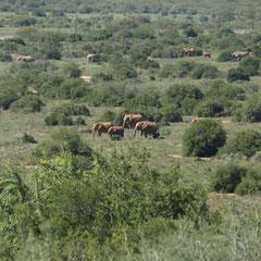 Elefanten soweit das Auge reicht