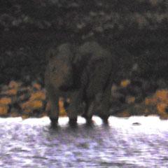 in der Dämmerung ein Nashorn am Waterhole ...