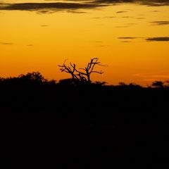 Sonnenuntergang in der Wildnis