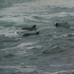 und immer wieder die Delfine