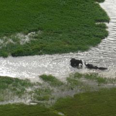 Elefanten erfrischen sich im Wasser