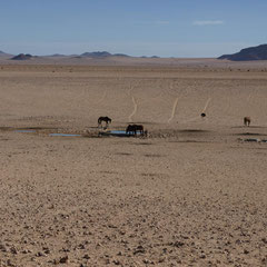 nur die wilden Pferde dürfen sich hier frei bewegen